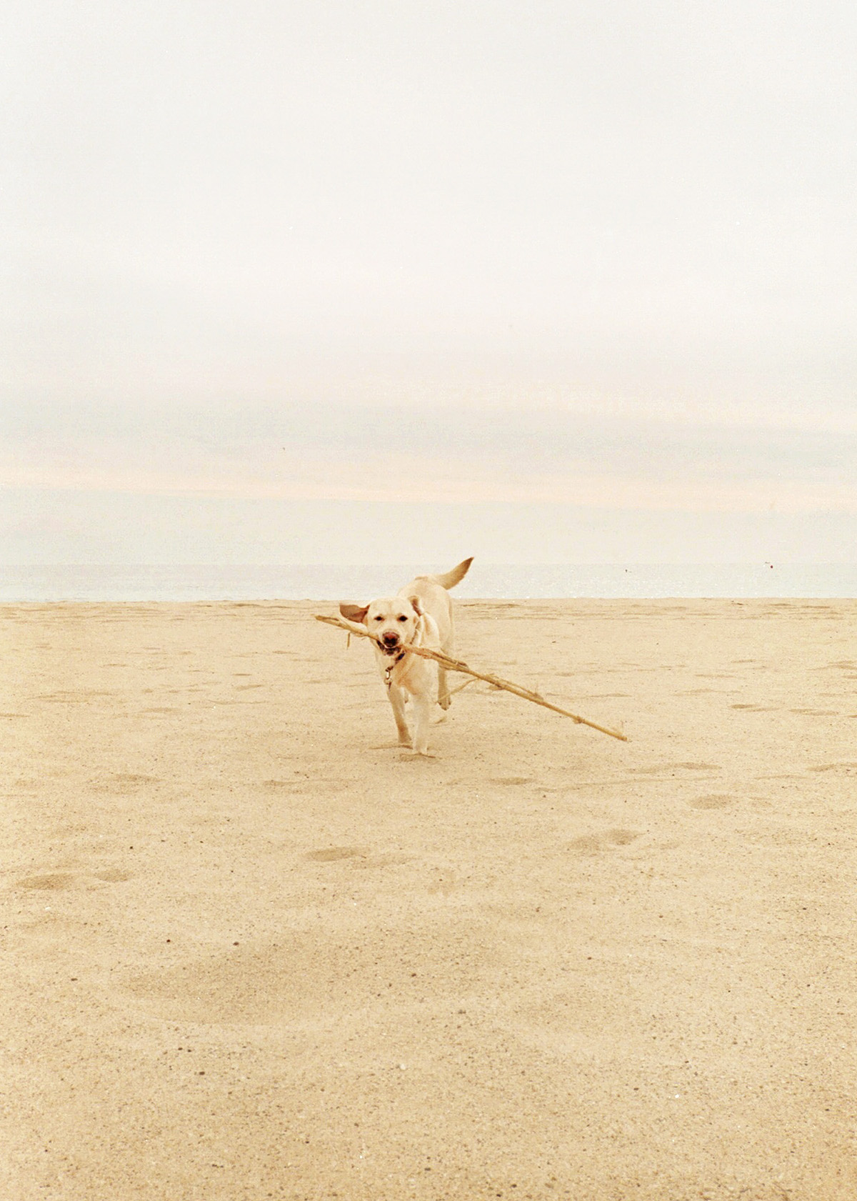 perro, palo, playa