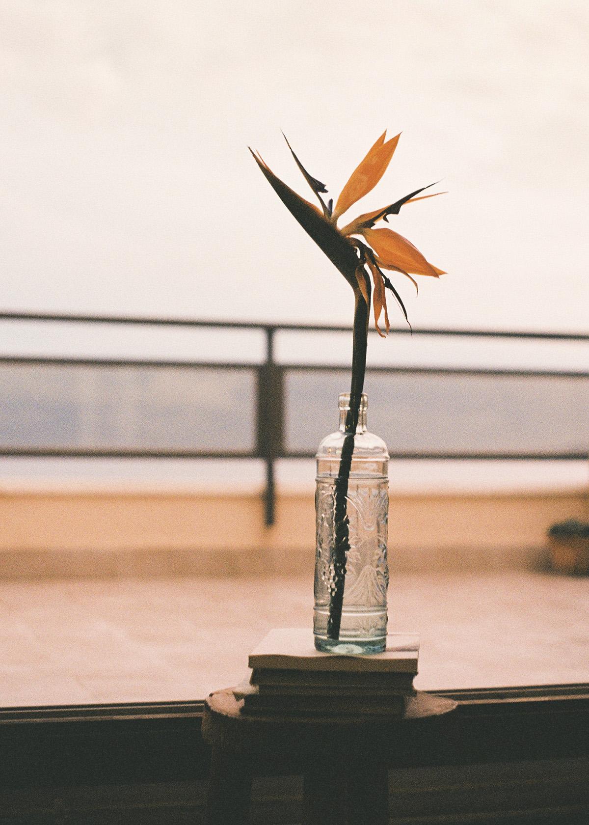 terraza, flor